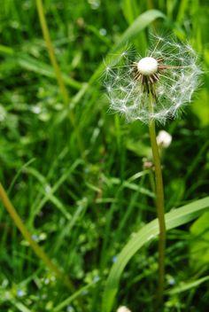 Eine Blüte richtig abzulichten ist nicht einfach. #fotografietipps #blütenfotos. Wir geben Hinweise & Tipps für gelungene Blumenbilder - eine leicht verständliche Anleitung auch für Anfänger. http://www.fotos-fuers-leben.ch/fotokurs/naturfotografie/tipps-naturfotografie-pflanzen-blumen/