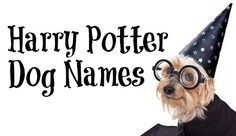 Names For Your Fang Or Fluffy We Provide A Large Selection Of Harry Potter Dog Names From The Worldwide Favo Harry Potter Dog Names Dog Names Harry Potter Dog