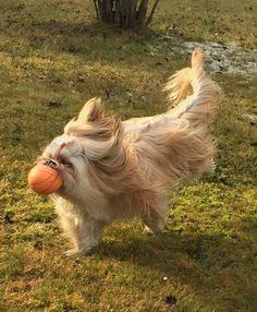 Hunde Foto: Manfred und Suri - Ich bin ja noch ein Baby Hier Dein Bild hochladen: http://ichliebehunde.com/hund-des-tages  #hund #hunde #hundebild #hundebilder #dog #dogs #dogfun  #dogpic #dogpictures
