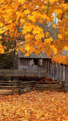 Barn In October... ᘡղbᘠ