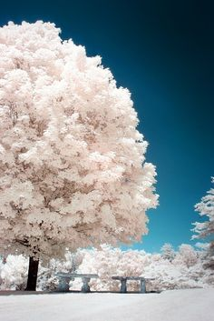 Magnificent trees in Asheville, North Carolina make for a sea of white in America's South. | A.D. The Series