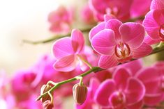 These tips for growing orchids as houseplants include info about repotting, watering, and positioning your orchid to increase your chances of success. Orchids In Water, Pink Orchids, Water Plants, Planting Plants, Flowering Plants, Orchid Tree, Orchid Plants, Orchid Flowers, Exotic Flowers
