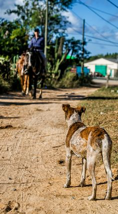 Local dog in Viñales excited that is owner is back from working the tobacco fields. The photo was taken By Lina Stock on the Divergent Travelers Photography Tour in Cuba. The Divergent Travelers Adventure Travel blog showcases great stories and some of the best travel photography in the world. We run photography tours not just in Cuba but throughout the world. http://www.divergenttravelers.com/horseback-riding-vinales-valley-cuba/