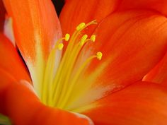 55 Beautiful Macro Flower Pictures - The Photo Argus Flowers Name List, Flower Names, Types Of Flowers, Red Tulips, Orange Flowers, Compost, Beauty Bush, Virtual Flowers, Amaryllis Bulbs