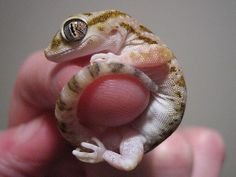 Tiny Animals on Fingers, Photos of Itty-Bitty Animals on People's Fingers
