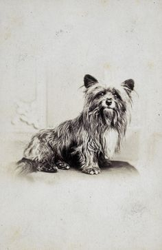 Greyfriars Bobby, the Skye terrier who guarded his master's grave at Greyfriars Kirkyard (Edinburgh), for fourteen years until his own death on 14 January Albumen print, c. Skye Terrier, Terrier Dogs, Cairn Terriers, Cairns, Greyfriars Bobby, Loyal Dogs, Dog Stories, Most Haunted, Edinburgh