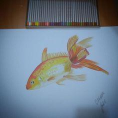 #art #artist #arts #fish #draw #drawing #artwork #drawings #balık #çizim #kurukalem #monami #insta #photo #nice #photooftheday #amazing #statigram #twegram #jj #sketch #sketching #pencil