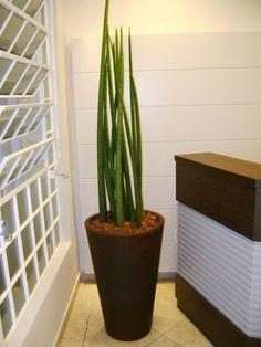 quais-plantas-para-se-ter-em- apartamentos-morando-sem-grana (5)d