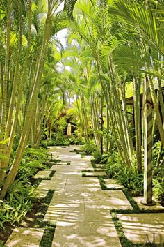 yellow palms forming a shady pathway