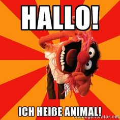 Animal says mad for it - Animal Muppet Happy Birthday Meme, Happy Birthday Messages, Happy Birthday Images, Birthday Greetings, Birthday Wishes, Birthday Memes, Birthday Stuff, Animal Birthday, Birthday Board