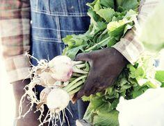 Greens with envy (The Promised Land Farm) #Savannah #Georgia #farm #CountryLiving