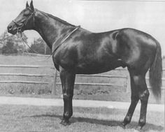 Polynesian:  damsire to Boldnesian, who was the grand-sire of the Slew!  Polynesian's grand-sire, a British TB named Sickle, was a son of the renowned Phalaris, who sired Pharos, who, when bred to the elegant Italian Catnip daughter, Nogara, sired Nearco, who sired Nasrullah, who sired Bold Ruler, who sired Secretariat.  That's one helluva sire-line and Encore got them both!