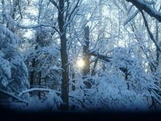 Sunrise in the Woods today 12/10/12