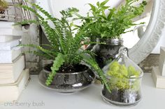 I love ferns!
