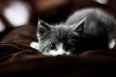 The color of a kitten's eyes changes as it grows older
