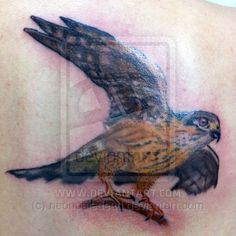 Wildlife and Nature Tattoos Photos, Videos and Stories - BME Small Falcon, Merlin Bird, Falcon Tattoo, Feminine Tattoos, Nature Tattoos, Tattoo Photos, Tattoo Inspiration, Wildlife, Birds