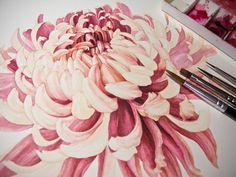 Paint it Eunike Nugroho: [WIP] Japanese Chrysanthemum Botanical Art, Botanical Illustration, Botanical Drawings, Watercolor Flowers, Watercolor Art, Orchid Drawing, Japanese Chrysanthemum, Chrysanthemum Flower, Japanese Watercolor