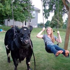 when your steer is that well trained... This is cute