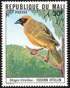 Southern Masked Weaver stamps - mainly images - gallery format