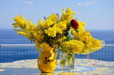 La mimosa: simbolo della Giornata Internazionale delle Donne. Perché?  Da quasi 60 anni la mimosa è il simbolo dell'8 marzo, la Festa della Donna, o meglio, della Giornata Internazionale delle Donne. Perché proprio questo fiore?  http://www.vivailoda.it/i-consigli-del-giardiniere-dettaglio.php?consiglioId=51  #mimosa #festadelladonna #storia