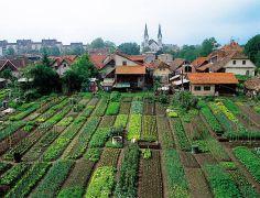 Market Gardens in Krakovo, Ljubljana, Slovenia.