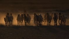 Beautiful The Coutry of Horses / by Ramiz Şahin