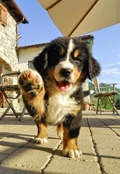 Cute puppy nice looking