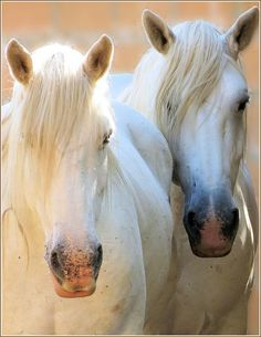 Horses at the riding stables, Botlierskop, Game Reserve, South Africa by robin denton, via Flickr