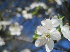 Spring, Flowers, Beauty, Blue Skies, Life...