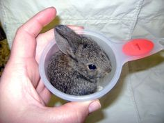 Funny Animal Pictures - View our collection of cute and funny pet videos and pics. New funny animal pictures and videos submitted daily. Tiny Bunny, Baby Bunnies, Cute Bunny, Bunny Rabbit, Adorable Bunnies, Small Rabbit, Adorable Animals, Hamsters, Animal Pictures