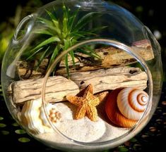 Air Plant and Driftwood in Glass Globe Hanging Terrarium Kit with Tillandsia Ai. Air Plant and Dri Terrarium Diy, Plastic Terrarium, Hanging Glass Terrarium, Air Plant Terrarium, Succulent Gardening, Planting Succulents, Succulent Plants, Cacti, Indoor Gardening