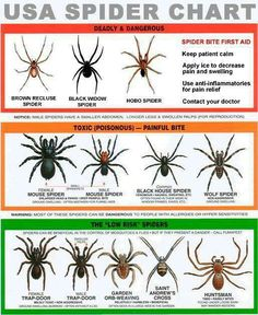 Not funny dangerous spiders