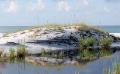 Topsail Hill Preserve State Park, off 30A in Santa Rosa Beach:  bike around the coastal dune lakes.  $6/car entrance fee.