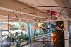 Frei wie ein Vogel, bunt wie das Leben. Das Wochenende war uns ein Volksfest. Heute haben wir geschlossen aber im UNGEHEUER VELDEN könnt ihr das WE ausklingen lassen.  #bistrobar151 #151er #klagenfurt #bird #freeyourmind #weekend #restaurant #wörthersee #designinspo #terrassendesign #lampe #vogel Free Your Mind, Klagenfurt, Restaurant Interior Design, Bunt, Parrot, Birds, Life, Parrot Bird, Parrots