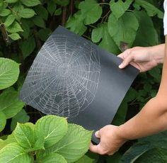 Echte spinnenwebben vangen. Neem een zwart blad en hou het achter het web. Zwier je blad naar voren en pak het web met je blad.