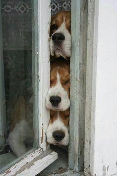 Whole Lotta Dogs Facebook post on 12/16/14