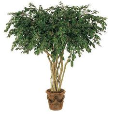8 foot Artificial Ficus Tree Ikea Artificial Flowers, Artificial Plants And Trees, Fake Trees, Artificial Plant Wall, Cool Ideas, Garden Plants, Indoor Plants, Indoor Garden, Potted Plants