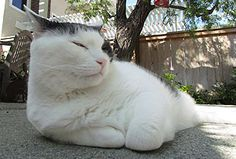 Friday Cat Blogging - 4 May 2012
