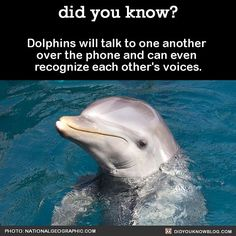 And now you are picturing a dolphin talking on the phone.  #dolphins #lol #animals #underthesea   Share the helpful knowledge! Tag your friends in the comments.  We post different content on all our different social media channels. Follow all our accounts so you don't miss out! http://ift.tt/1FVnDRT http://ift.tt/14BKkrR http://twitter.com/didyouknowfacts  #DYN #FACTS #TRIVIA #TIL #DIDYOUKNOW #NOWIKNOW by didyouknowblog