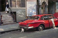Helen Levitt, Cat Next to Red Car, New York, 1973