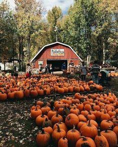 Its finally Friday  - #seasons #autumn #fall #follow #aesthetic #tumblr #photography #cozy #festive #beauty #colourful #pumpkins #nature #barn #farm #sweaterweather #september