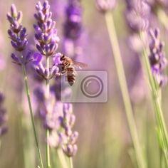 """Fotomural """"lavandula, flor, abeja - ramitas de lavanda y abejas"""" ✓ Amplia selección de materiales ✓ Impresión 100% ecológica ✓ ¡Comprueba las opiniones de nuestros clientes!"""