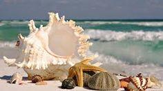 Resultado de imagem para conchas do mar