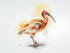 Scarlet Ibis Eudocimus ruber Original Watercolor Painting High
