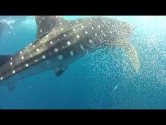 Kreuzfahrt mit Walhai-Begegnung auf den Seychellen | traveLink