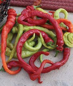 Pepper Hot Ristra Cayenne Hybrid