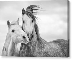 Black And White Horse Photograph - Best Friends I by Tim Booth Tim Booth, Animal Art Prints, Canvas Art, Canvas Prints, Framed Prints, Thing 1, Horse Pictures, Horse Photos, Animal Pictures