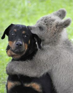 ::: unlikely friendships between bear and dog. Lorr