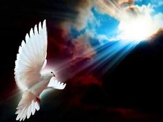 Pix For > Peace Dove Wallpaper Saint Esprit, Peace Dove, Art Pictures, Photos, White Doves, Mosaic Art, Beautiful Birds, Holy Spirit, Free Spirit