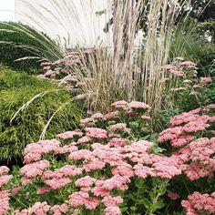 Planting, Garden, Tips, Plants, Garten, Gardens, Lawn And Garden, Tuin
